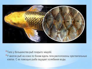 Тело у большинства рыб покрыто чешуёй. У многих рыб на коже по бокам вдоль те