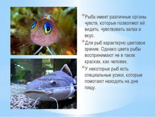 Рыба имеет различные органы чувств, которые позволяют ей видеть, чувствовать