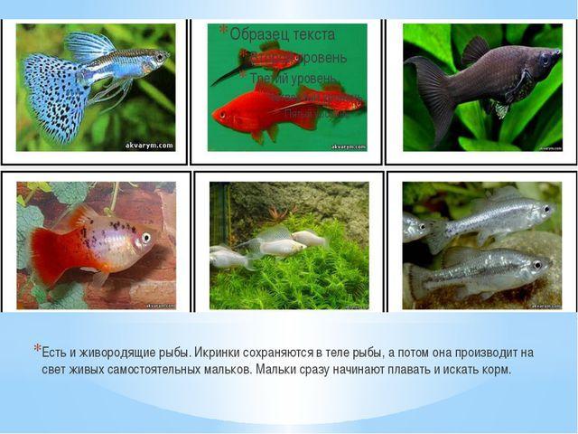 Есть и живородящие рыбы. Икринки сохраняются в теле рыбы, а потом она произво...