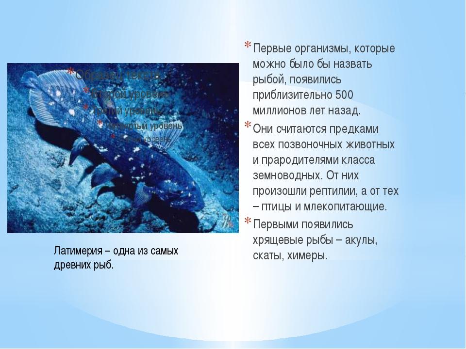Первые организмы, которые можно было бы назвать рыбой, появились приблизитель...