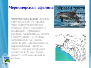 Черноморская афалина Черноморская афалина- дельфин, длина тела до 230 см. Афа