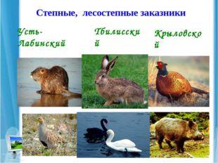 Степные, лесостепные заказники Усть-Лабинский Тбилисский Крыловской