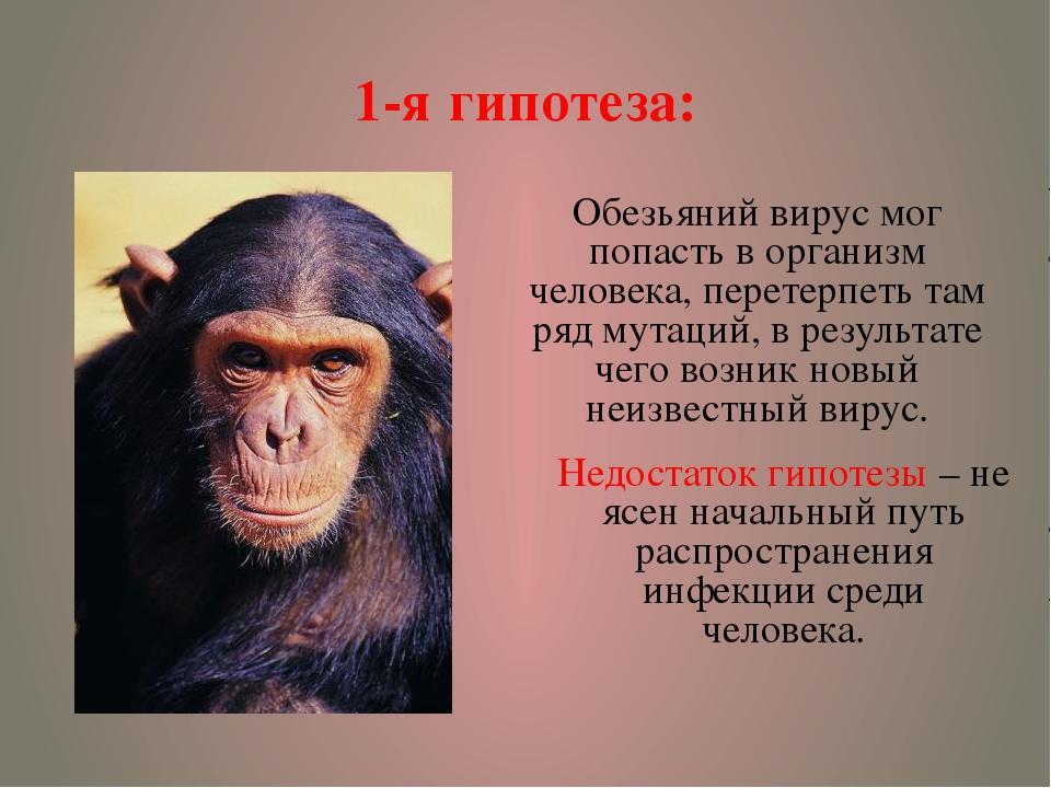 1-я гипотеза: Обезьяний вирус мог попасть в организм человека, перетерпеть та...