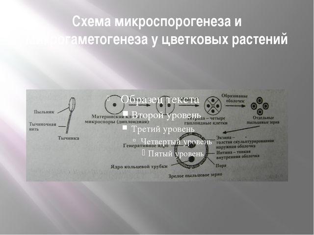 Схема микроспорогенеза и микрогаметогенеза у цветковых растений