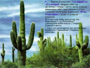Кактус(Cactaceae) –қос жарнақтыкөп жылдық, шырын сабақты шөптесін өсімдік