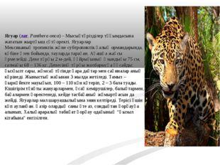 Ягуар(лат.Panthera onca) –Мысықтәрізділертұқымдасына жататын жыртқышсүтқ