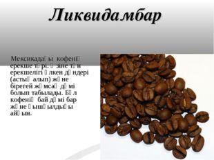 Ликвидамбар Мексикадағы кофенің ерекше түрі. Өзіне тән ерекшелігі үлкен дәнде