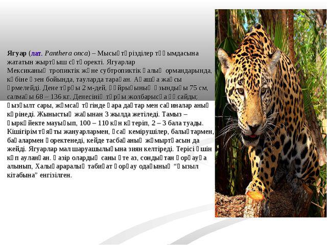 Ягуар(лат.Panthera onca) –Мысықтәрізділертұқымдасына жататын жыртқышсүтқ...