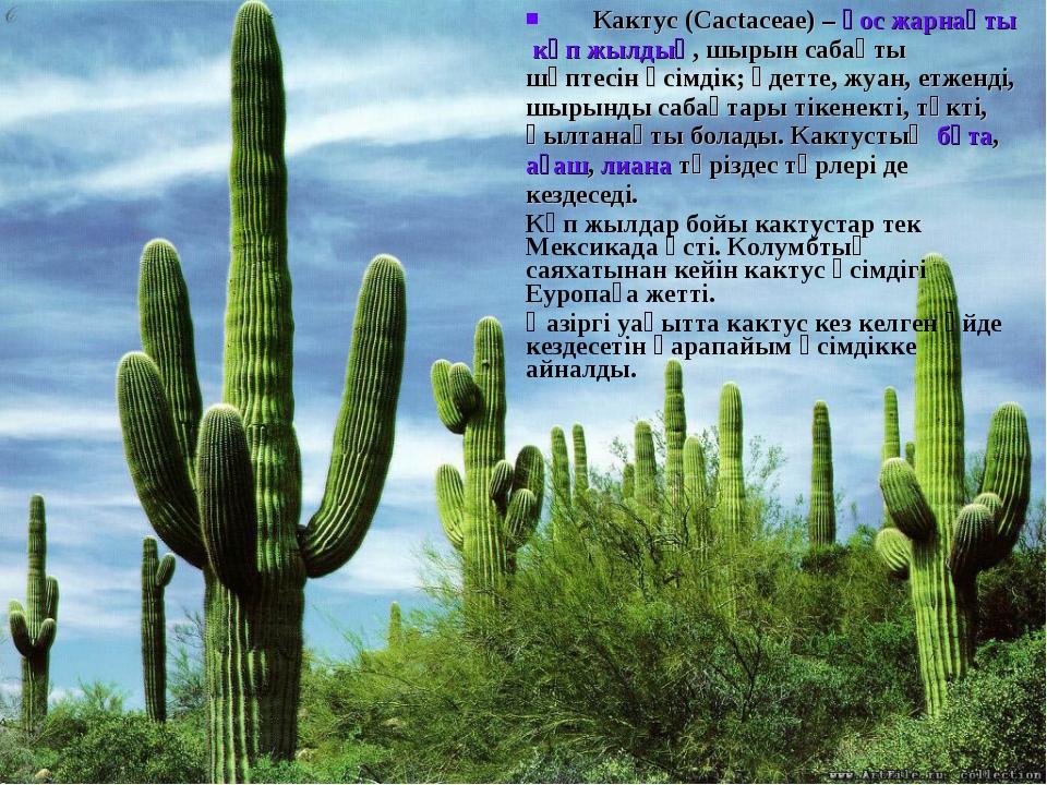 Кактус(Cactaceae) –қос жарнақтыкөп жылдық, шырын сабақты шөптесін өсімдік...