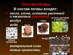 Состав почвы. песок, глина, остатки растений и насекомых (перегной) воздух во