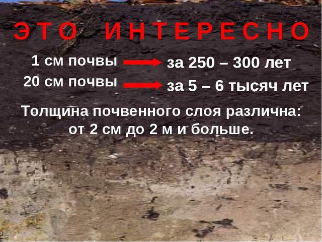 1 см почвы 20 см почвы за 250 – 300 лет за 5 – 6 тысяч лет Э Т О И Н Т Е Р Е...