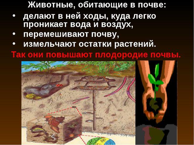 Животные, обитающие в почве: Так они повышают плодородие почвы. делают в ней...