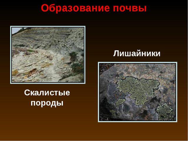 Образование почвы Скалистые породы Лишайники