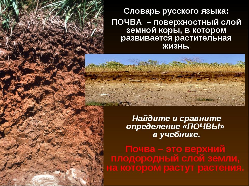 Словарь русского языка: ПОЧВА – поверхностный слой земной коры, в котором раз...