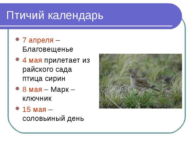 Птичий календарь 7 апреля – Благовещенье 4 мая прилетает из райского сада пти...