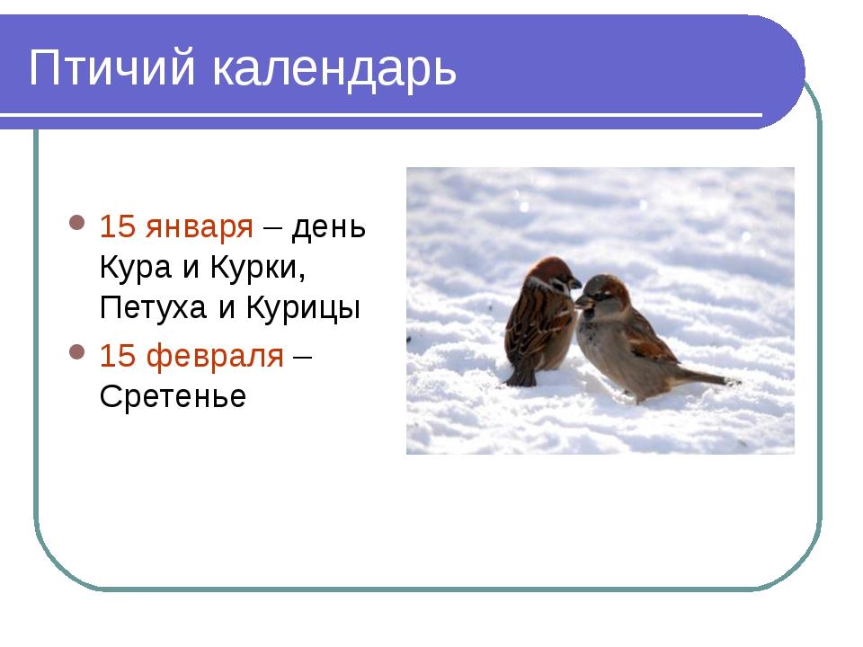 Птичий календарь 15 января – день Кура и Курки, Петуха и Курицы 15 февраля –...