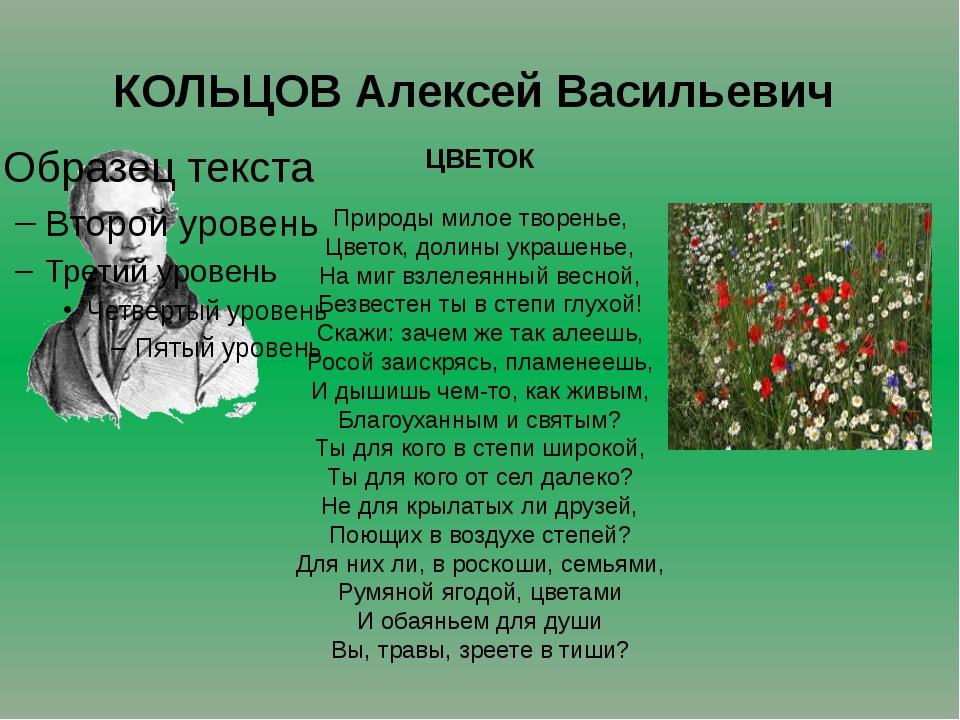 КОЛЬЦОВ Алексей Васильевич ЦВЕТОК Природы милое творенье, Цветок, долины укра...