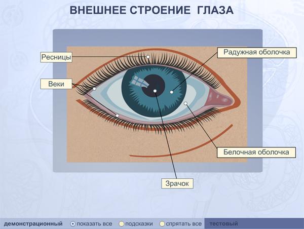 Глаза 3 класс