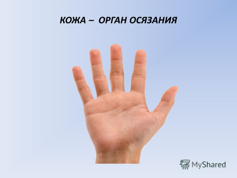 http://images.myshared.ru/123295/slide_5.jpg
