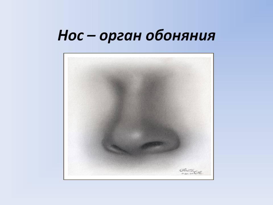 http://5klass.net/datas/okruzhajuschij-mir/Organy-chuvstv-1-klass/0006-006-Nos-organ-obonjanija.jpg