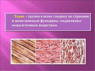 Ткань – группа клеток сходных по строению и выполняемым функциям, соединенны