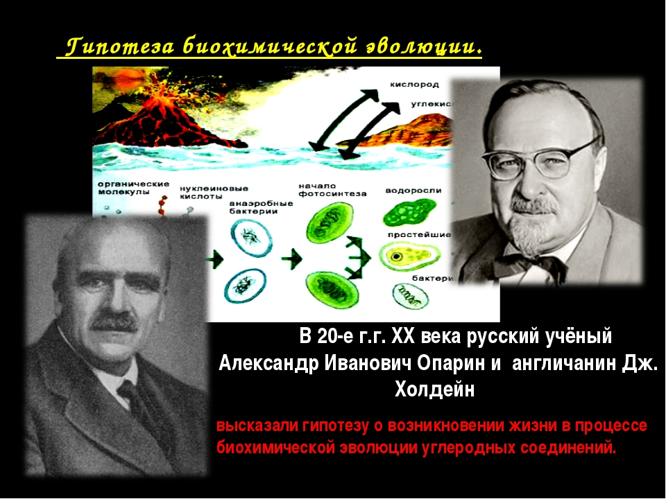 Гипотеза биохимической эволюции. В 20-е г.г. XX века русский учёный Александ...