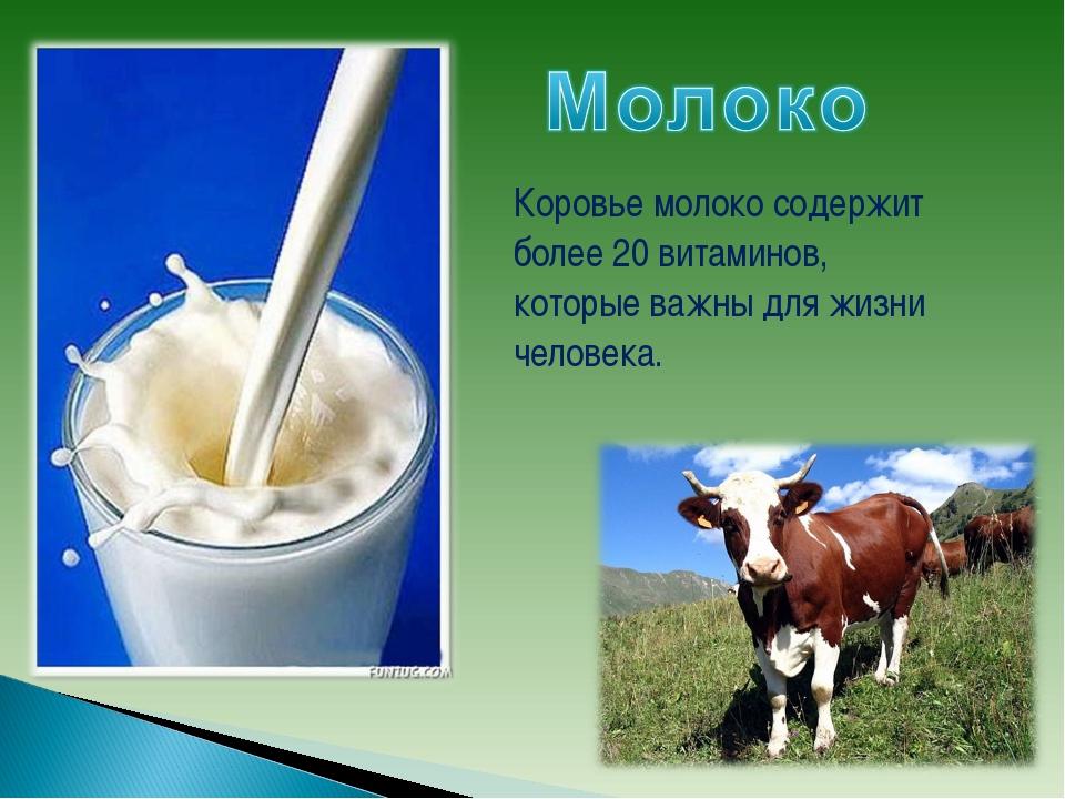 Коровье молоко содержит более 20 витаминов, которые важны для жизни человека.