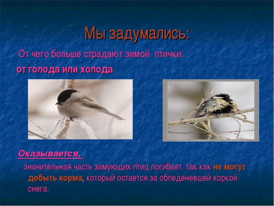 Мы задумались: От чего больше страдают зимой птички: от голода или холода Ока...