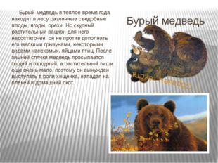 Бурый медведь Бурый медведь в теплое время года находит в лесу различные съед
