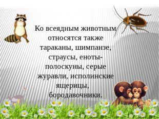 Ко всеядным животным относятся также тараканы, шимпанзе, страусы, еноты-полос