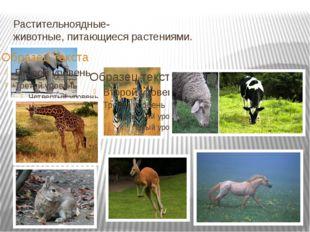Растительноядные- животные, питающиеся растениями.