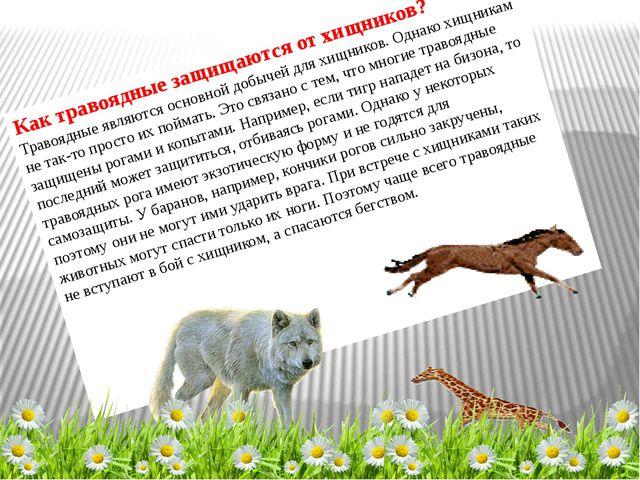 Как травоядные защищаются от хищников? Травоядные являются основной добычей д...