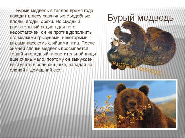 Бурый медведь Бурый медведь в теплое время года находит в лесу различные съед...