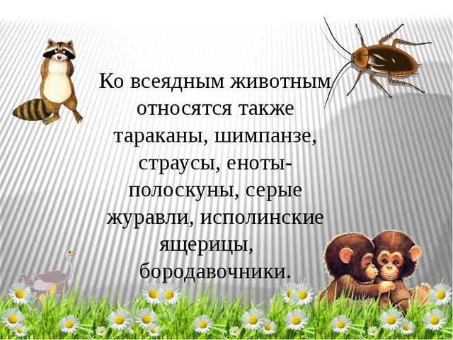 Ко всеядным животным относятся также тараканы, шимпанзе, страусы, еноты-полос...