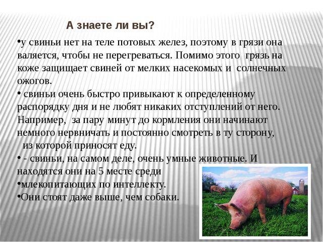 А знаете ли вы? у свиньи нет на теле потовых желез, поэтому в грязи она валя...