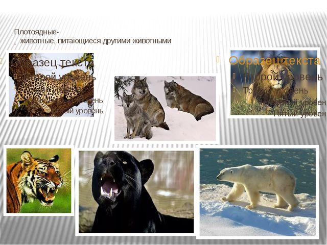 Плотоядные-  животные, питающиеся другими животными