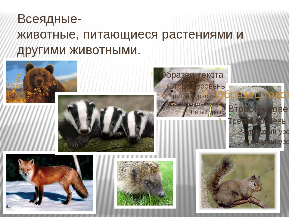 Всеядные- животные, питающиеся растениями и другими животными.