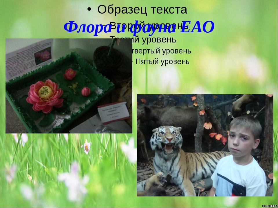 Флора и фауна ЕАО