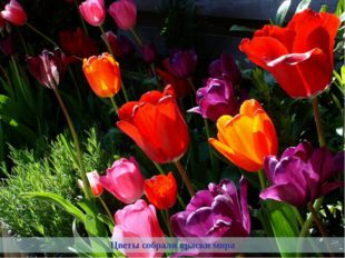 Цветы собрали краски мира