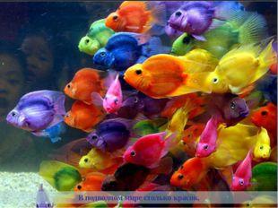 В подводном мире столько красок,