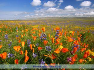 Весной цветущие поля!