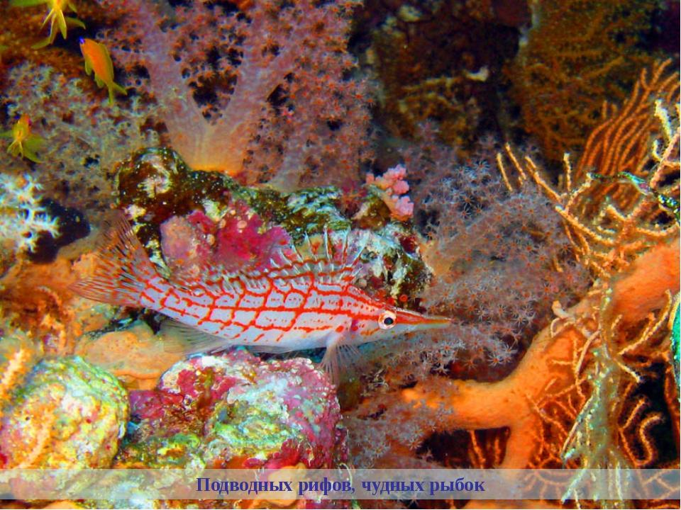 Подводных рифов, чудных рыбок