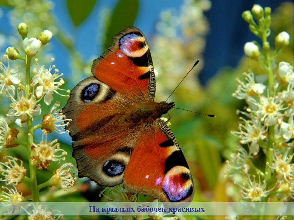На крыльях бабочек красивых
