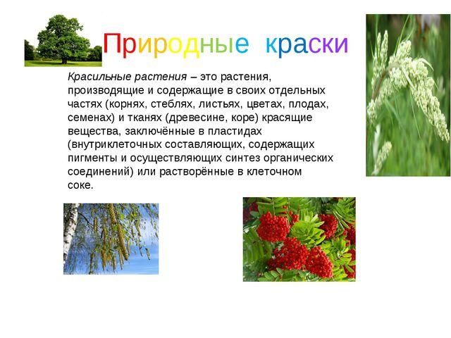 Природные краски Красильные растения– это растения, производящие и содержащи...