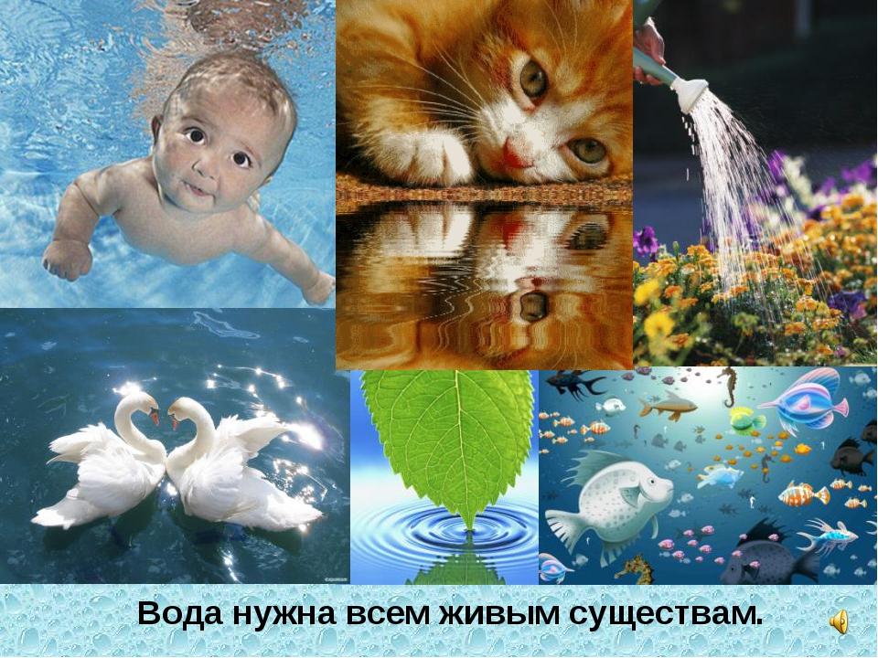 Вода нужна всем живым существам.