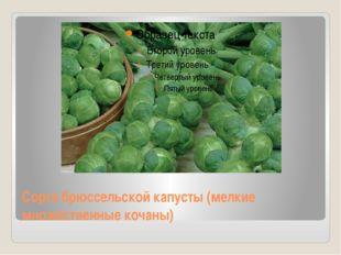 Сорта брюссельской капусты (мелкие множественные кочаны)