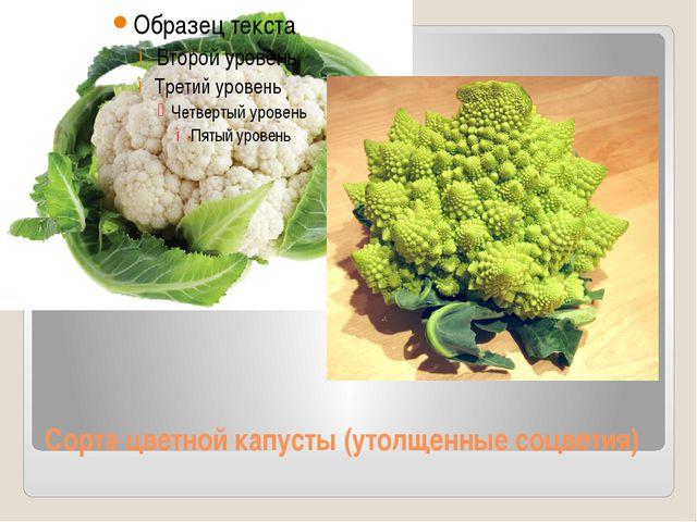 Сорта цветной капусты (утолщенные соцветия)