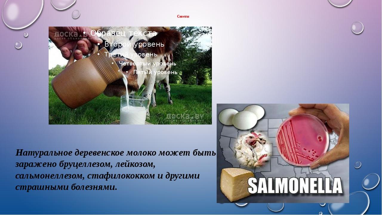Советы Натуральное деревенское молоко может быть заражено бруцеллезом, лейкоз...