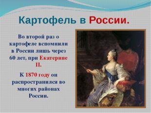 Картофель в России. Во второй раз о картофеле вспомнили в России лишь через 6