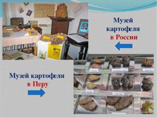 Музей картофеля в России Музей картофеля в Перу